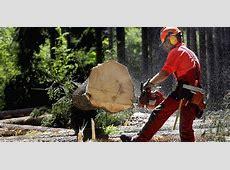 Forstbetrieb lehrt das Sägen mit Qualitätspass Bad