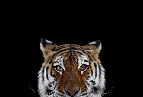 create studio portraits  exotic animals