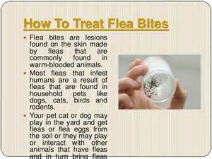 how to get a cat to like you flea bites