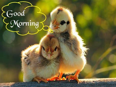 sor sbah alkhyr good morning sor mktob aalyha sbah alkhyr