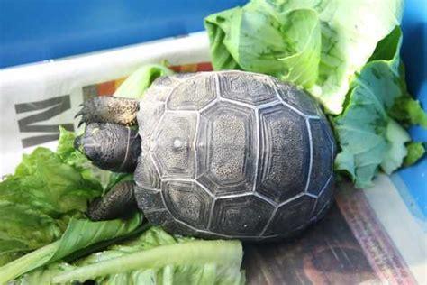 jenis  harga kura kura hias binatang peliharaan