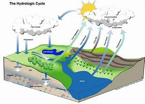 Kelly Brenner The Hydrologic Cycle