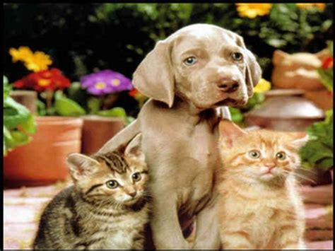 Cat And Dog Cats And Dogs Wallpapers Wallpaper Cave