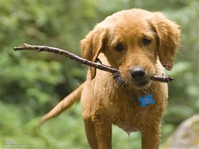 Dog Anjing Anak Stick Imut Cerita Mesum