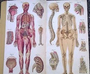 Old Medical Anatomy Book Color Plates Baillieres Atlas