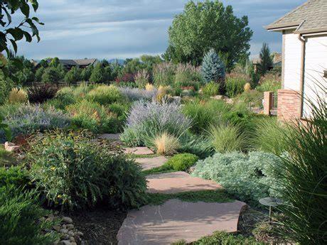 landscape planting in the desert landscaping network