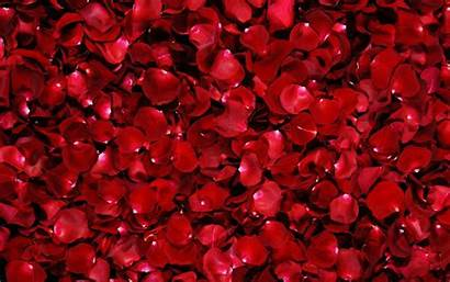 Roses Rose Background Petals Backgrounds Flower Wallpapers