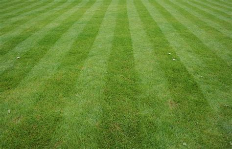 Lawn Care, Snow Removal And Yard