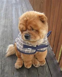 10 Adorable Puppies Wearing Sweaters. I Love Every Single ...