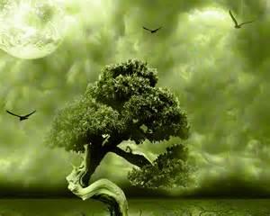 interior design websites home bonsai widescreen wallpaper wide wallpapers net