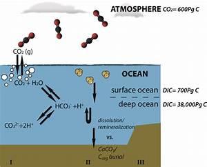 Ocean Acidification And The  U201cshort Term U201c Marine Carbon Cycle