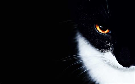 Black And White Cat Wallpapers  Wallpaper Cave