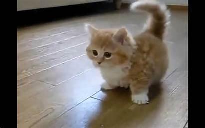 Playing Gifs Animals Kitten Gogosqueez Playfully Core