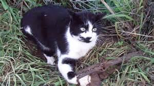 Animal Traps Cats