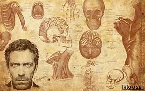 Anatomy Wallpaper HD - WallpaperSafari