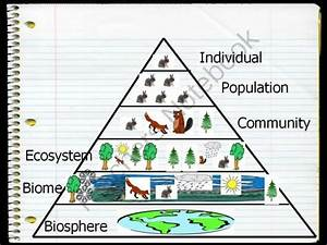 This is an ecological pyramid. It has six parts that make ...