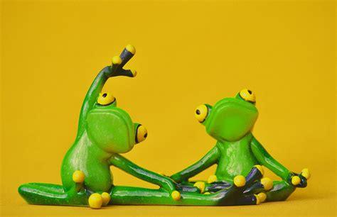 images sweet animal cute green frog amphibian