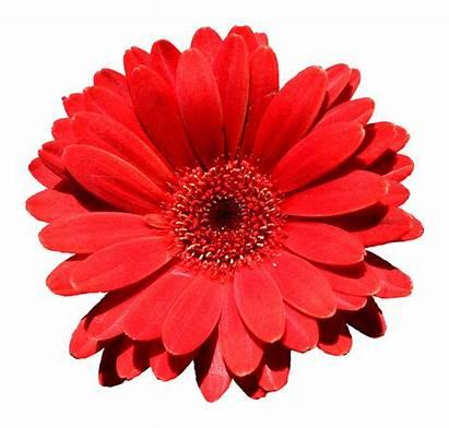 Flower Need