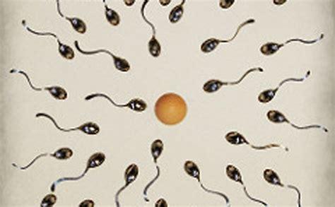 fertilità e alimentazione fertilit 224 e alimentazione dott ssa cazzato