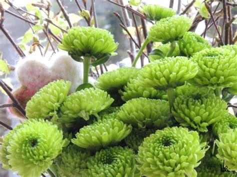 flower friday gruene chrysanthemen flower friday