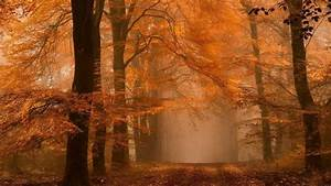 Nature, Landscape, Forest, Fall, Mist, Path, Amber, Leaves