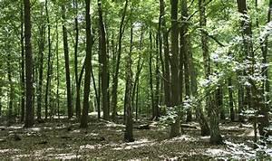 Bilder Vom Wald : naturnahe forstwirtschaft wald mv ~ Yasmunasinghe.com Haus und Dekorationen