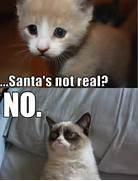 Angry Cat Memes No Ima...