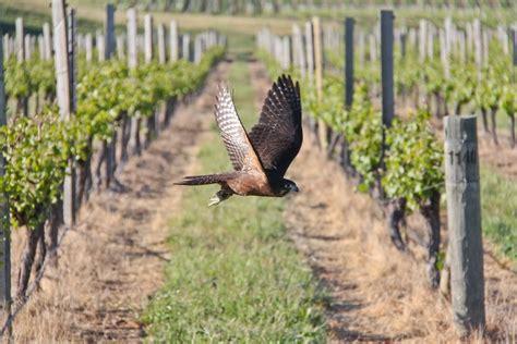 Picture Of Man O' War Vineyards, Waiheke
