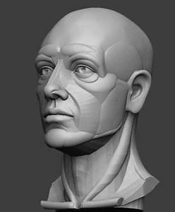 3d Printable Model Planar Simplified Male Head