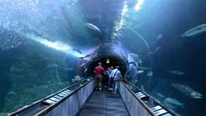 Aquarium of the Bay Tunnel, San Francisco - YouTube