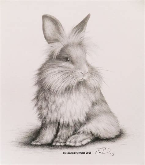 bunny graphite pencil drawing nl konijntje