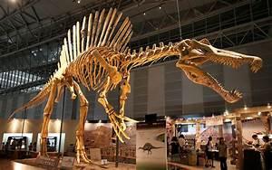 File:Spinosaurus skeleton.jpg - Wikipedia