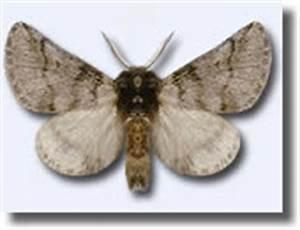 Papillon Chenilles Processionnaires : les pieges bio l 39 copi ge pour les chenilles les pieges ph romones pour les papillons ~ Dallasstarsshop.com Idées de Décoration