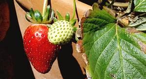 5 consejos para empezar un huerto en casa conciencia eco for 5 cultivos faciles para empezar un huerto en casa