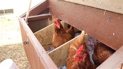build  simple suburban chicken coop