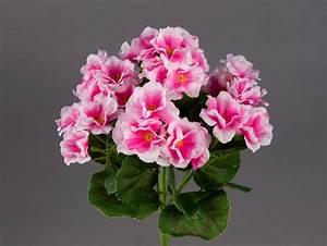 Orchideen Ohne Topf : geranie 26cm rosa ohne topf zf modell 2018 kunstblumen k nstliche blumen ebay ~ Eleganceandgraceweddings.com Haus und Dekorationen