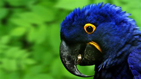 Macaw Parrot Hd Wallpapers  Macaw Pictures Hd Images Hd