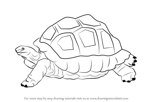 learn   draw  tortoise zoo animals step  step