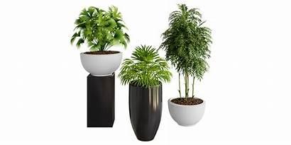 Plants Pot Blender Plant Documentation Ratings Faq