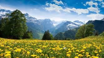light blue flowers landscape 2560x1440 hd wall