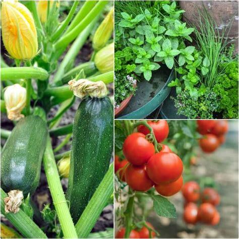 Gardening For Beginners by Gardening For Beginners Vegetable Gardening For Beginners