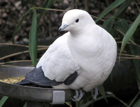 What Does Stool Pigeon - of smidgens and stool pigeons we the of the