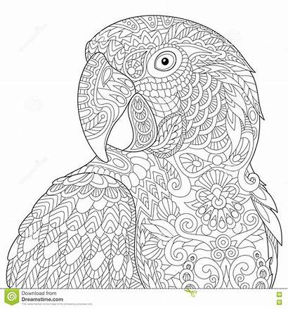 Macaw Zentangle Adult Coloring Parrot Arara Stylized