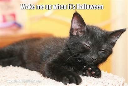 Cat Meme Funny Kitten Grumpy Humor Quote
