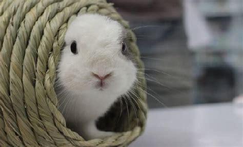 kaninchen und hase wo ist der unterschied