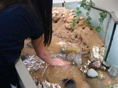 fiddler crab habitat aqua havens  education