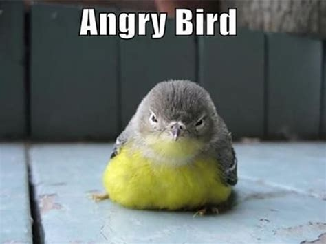 30 Crazy And Funny Bird Pictures Tail And Fur