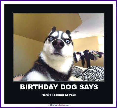 happy birthday memes  funny cats dogs  cute animals