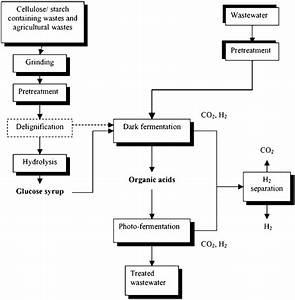 15 A Schematic Diagram For Bio