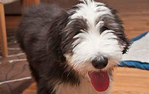 The 10 Most Affectionate Dog Breeds – iHeartDogs com
